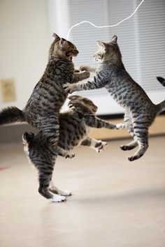 everybody was kung fu fighting .... huh. those kitties were fast as lightning ....
