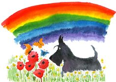 Scottish Terrier Dog Rainbow , printed on Fine quality photographic ink-jet Satin paper ,Photo Satin 300gsm. This luxury heavyweight photo paper