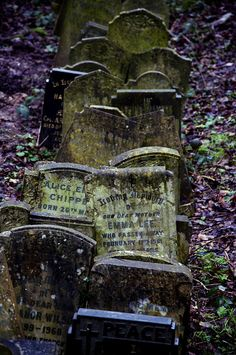 Abney Park Cemetery by Mark Rodseth, via Flickr