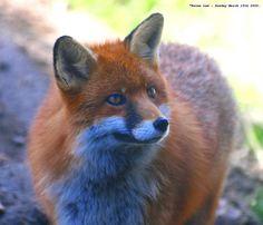 She's a Fox...:O))