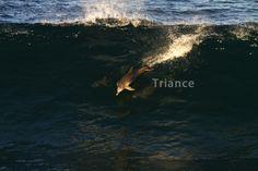 Goldern Surfer.