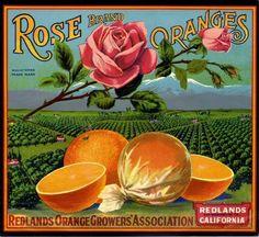 redlands fruit crate | Redlands Rose Orange Citrus Fruit Crate Label Art Print | eBay