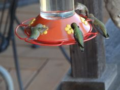 Hummingbirds flocked the entire time we were there.
