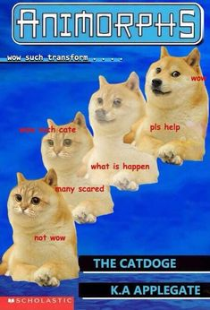 Best Of The Doge Meme – 15 Pics. Laugh your self out with various memes that we collected around the internet. Funny Animal Memes, Funny Cats, Funny Animals, Cute Animals, Animal Humor, Farm Animals, Dankest Memes, Funny Memes, Hilarious