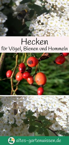 Natürliche Gartengestaltung ist abwechslungsreich und hilft Vögeln und Insekten.