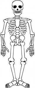 Mirror image lesson coordinates with axial skeleton and anatomy lessons from My Body.