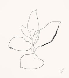 Cate Adriana | minimalism