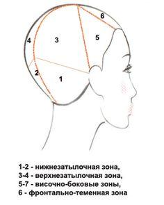 Деление головы на зоны при стрижке