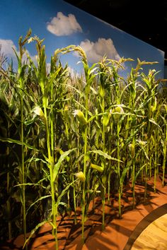 Where does our food come from? Learn about agriculture and the modification of food in this exhibition.