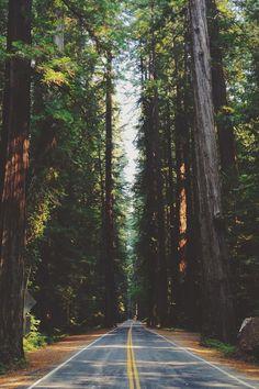 Resultado de imagem para florestas lindas tumblr