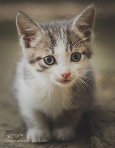 C a t. by SebastianRotaru #animals #animal #pet #pets #animales #animallovers #photooftheday #amazing #picoftheday