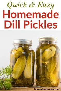Canning Dill Pickles, Garlic Dill Pickles, Pickled Garlic, Recipe For Canning Pickles, Kosher Pickles, Pickled Eggs, Easy Canning, Canning Recipes