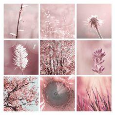 floral-photos-photography-009