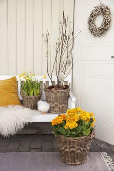 Her har vi hengt påskeegg på grenene til en magnoliabusk. Lots Of Money, Recycled Materials, Daffodils, Handicraft, Decorative Items, Easy Crafts, Recycling, Easter, Homemade