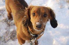 Protégez les pattes de votre chien avec de la vaseline quand il est dans la neige. Appliquez de la vaseline sur les pattes de votre chien pour empêcher le sel et les produits chimiques en général de dessécher ses pattes. Après la promenade, rincez les pattes de votre chien à l'eau tiède juste au cas où.