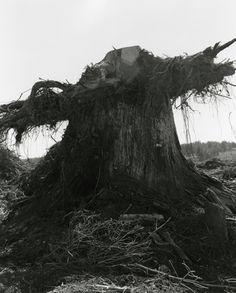 """Robert Adams.  Coos County, Oregon. 1999.  Series: Turning Back. """"deforestation is not just the exhaustion of resources, but the exhaustion of spirit"""""""