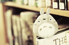 Totoro helps read. <3