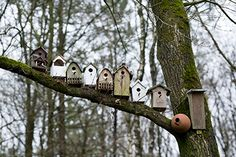 Vogelnestkastjes. Bird nest boxes.