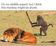 Cute Animal Memes, Funny Animal Quotes, Animal Jokes, Funny Animal Pictures, Cute Funny Animals, Funny Cute, Funny Images, Funny Photos, Mom Funny