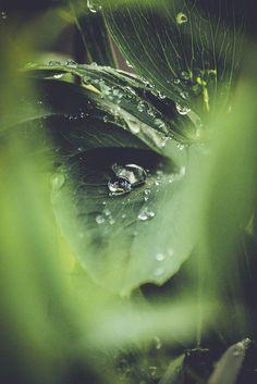 The Face of Nature   por PelaSchmidt