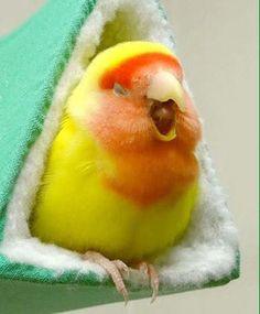 Yawn...not ready to wake up yet.