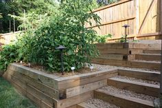 Terrace garden with the path for easy access to the next level.