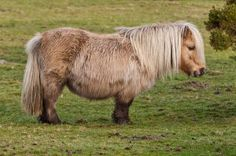 A man recently dragged his pony behind a pickup truck and beat it repeatedly with a belt buckle. Although he was charged with animal cruelty, he should not ever be allowed to own animals again. Please sign this petition to remove his right to own animals.