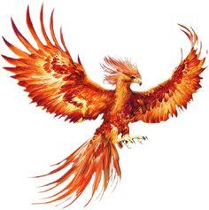 Phoenix Artwork, Phoenix Drawing, Phoenix Images, Phoenix Tattoo Feminine, Phoenix Bird Tattoos, Phoenix Tattoo Design, Phoenix Design, Rising Phoenix Tattoo, Crow Tattoos