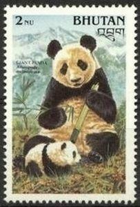 Giant Panda (Ailuropoda melanoleuca)