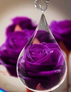 parel bloem www.isahealing.eu