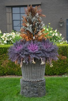 fall container with broom corn stalks - Modern Fall Container Plants, Fall Containers, Container Gardening, Fall Window Boxes, Window Box Flowers, Broom Corn, Ornamental Cabbage, Corn Stalks, Fall Planters