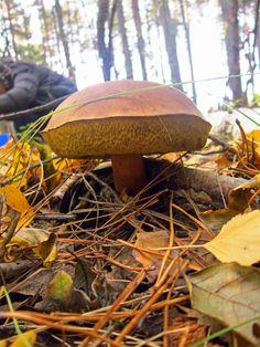 #лес #forest #mushrooms #грибы