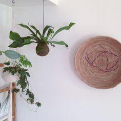コウモリの羽や鹿の角に例えられるユニークな葉の形をしたコウモリラン♪苔玉付なら空中をオシャレに演出する事が出来て見た目もとってもキュート♡素敵な飾り方を参考にあなたも苔玉コウモリランを育ててみませんか?