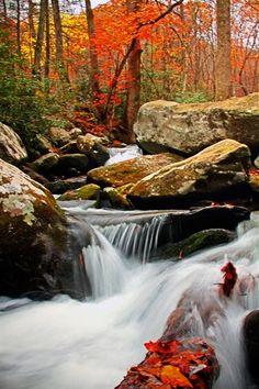 Roaring Fork Motor Nature Trail - #GatlinburgMoments by Terri
