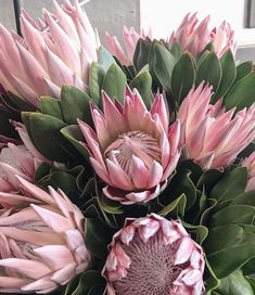 Protea Art, Protea Flower, Large Flowers, Beautiful Flowers, Flowering Bushes, Flower Quilts, Language Of Flowers, Pink Peonies, Flower Wallpaper