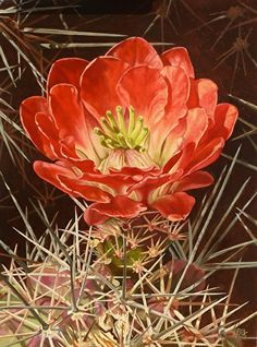 Cactus Painting, Fruit Painting, Cactus Art, Cactus Flower, Flower Art, Art Flowers, Flowering Succulents, Desert Art, Watercolor And Ink