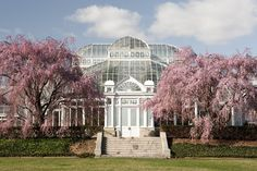 Weeping cherries flank the Conservatory. New York Botanical Gardens.