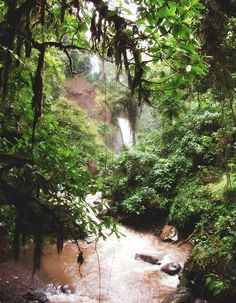 The Waterfall Gardens - Costa Rica, photo by Bridgette Salvon