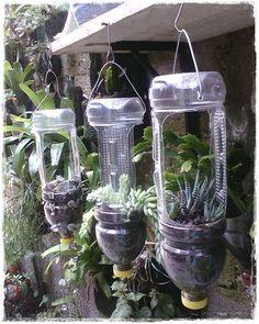 Plant hangings