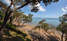 Coopers Beach, Northland, New Zealand New Zealand, Coast, Celestial, Bird, Sunset, Beach, Water, Outdoor, Gripe Water