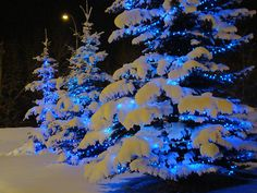 blue lit trees in snow