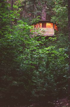 31 best Ideas for tree house forest green life Cabins And Cottages, Trendy Tree, Cabins In The Woods, Green Life, In The Tree, Interior Exterior, The Great Outdoors, Future House, Outdoor Living