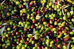 olive wallpaper hd