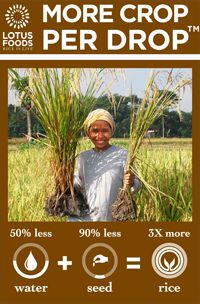 More Crop Per Drop!  50% less water, 90% less seed = 3 times the rice yield!  A simple, more sustainable way to grow rice using less resources.