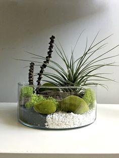 Air Plant Terrarium Kit and Stained Glass Inspiration - Pflanzen garten Air Plant Display, Plant Decor, Air Plants, Indoor Plants, Large Glass Vase, Sea Glass, Mini Zen Garden, Air Plant Terrarium, Mini Terrarium