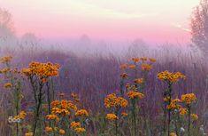 superbnature:  My summer paradise by ginaups http://ift.tt/1xZKUJK