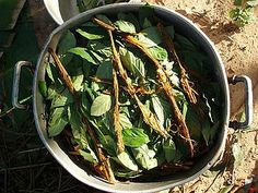 Brazilian Scientist: Ayahuasca/DMT Can Effectively Treat Cancer - Expanded Consciousness Cannabis, Sacred Plant, Pineal Gland, Good Mental Health, Cure Diabetes, Cancer Cure, Medicinal Plants, Natural Treatments, Natural Medicine