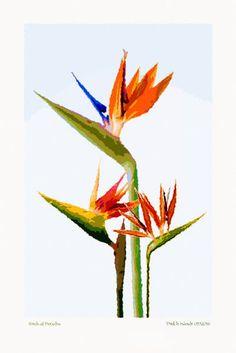 'Birds of Paradise' von Dirk h. Wendt bei artflakes.com als Poster oder…