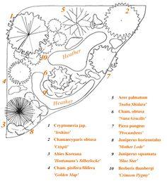 conifer garden plan