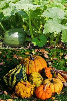 Vegetable Planting Guide, Planting Vegetables, Pumpkin Vegetable, Planting Pumpkins, Liquid Fertilizer, Best Fruits, Harvest Time, Skin So Soft, Trellis